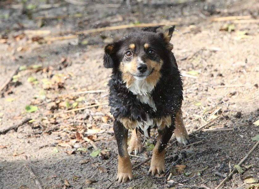 Pies chciał utopić pana