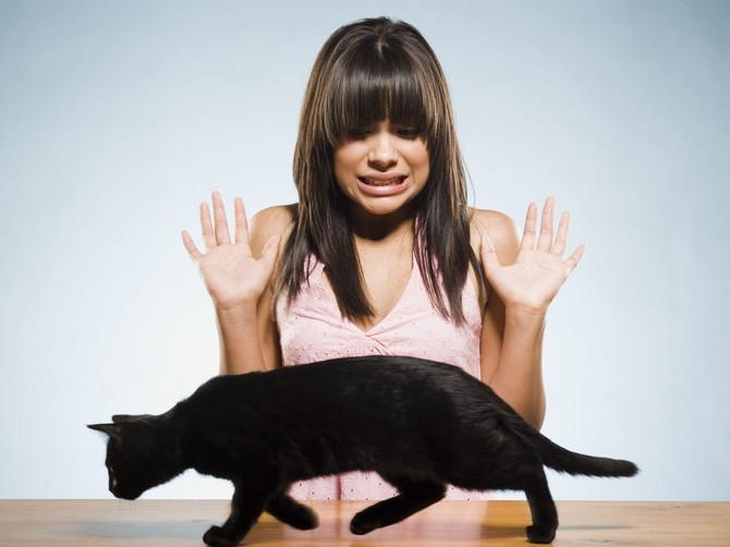 Strah od crne mačke