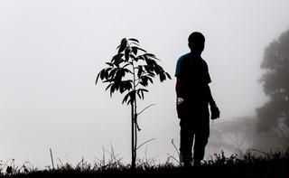 Łódź planuje powiększenie obszaru miejskich lasów o 150 ha