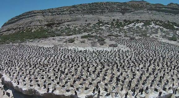 Ovo je samo jedna kolonija ptica