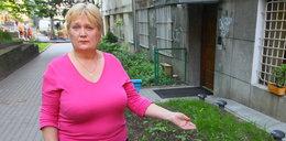 Robotnicy zniszczyli mój ogródek