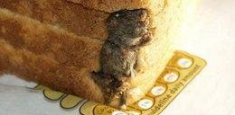 Te obrzydlistwa znaleziono w jedzeniu. Zdjęcia szokują
