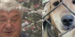 Masowo zabijali psy? Burmistrz Wojnicza wyjaśnia