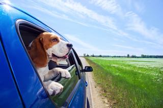 Planujesz wakacje ze swoim zwierzęciem? Pamiętaj dla niego o paszporcie