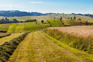 Podatek rolny: Stawki, ulgi i zwolnienia