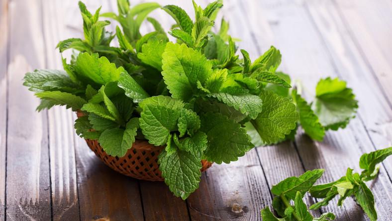 Ma delikatny, lekko gorzki, a jednocześnie cytrynowy smak. Najczęściej zaparza się suszone, rozdrobnione liście. W herbatkach i preparatach ziołowych bywa łączona z walerianą.