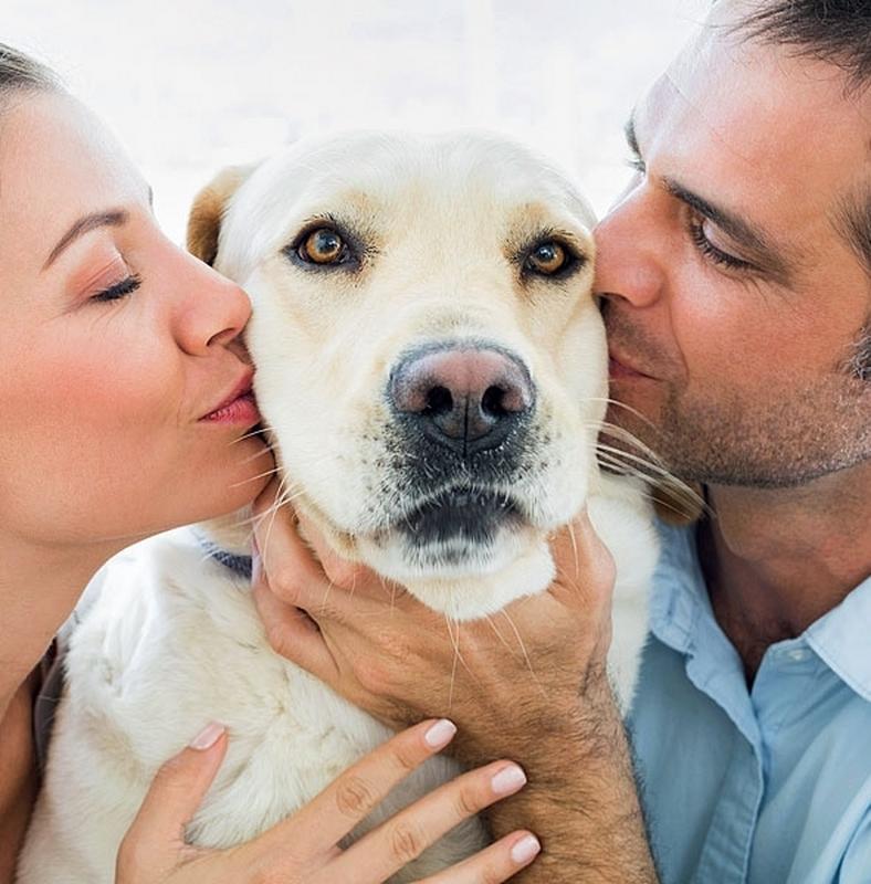 Egyetlen állatorvos randi