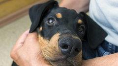 Adopcja psa w czasie pandemii
