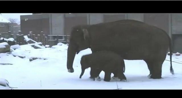 Mumba prvi put na snegu