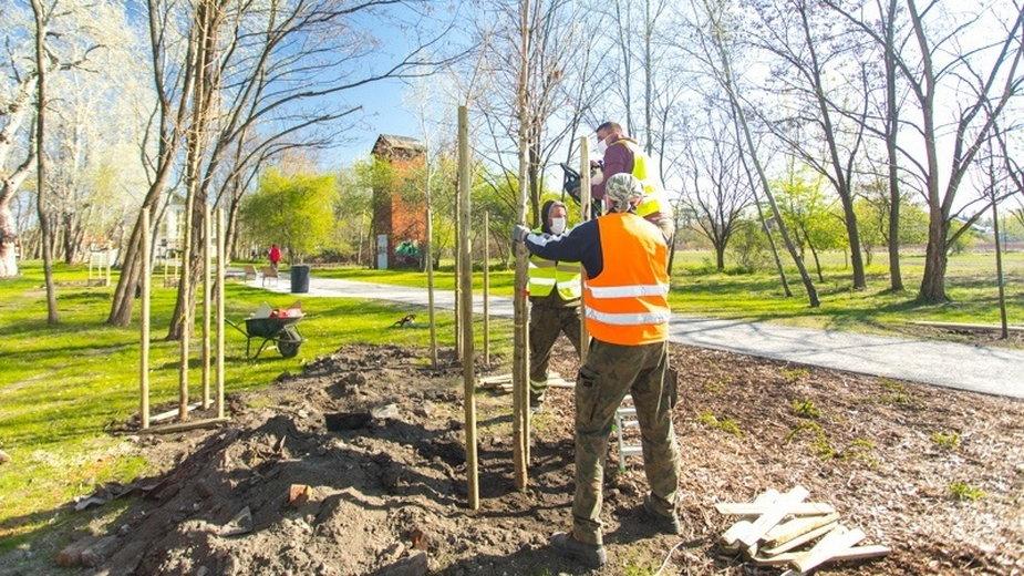 Wrocław: rusza wielka akcja sadzenia drzew. Na start posadzą ich 750