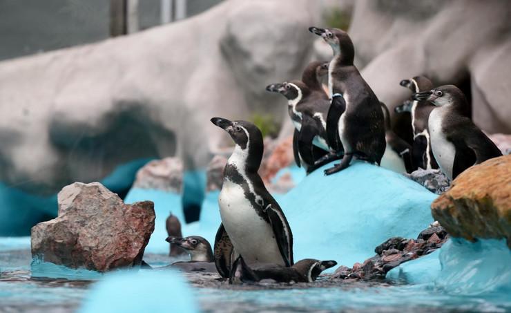 zoološki vrt pingvini