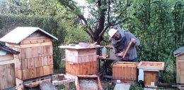 Wytruli mu 2,5 mln pszczół, a on im życzy... szczęścia!