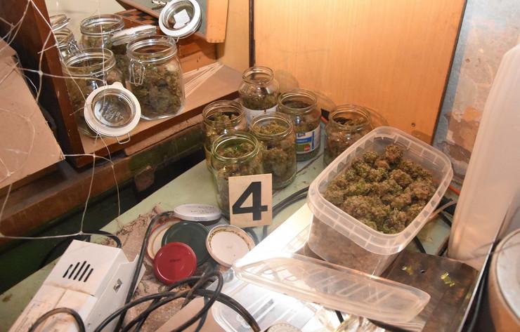 marihuana kanabis trava zaplena