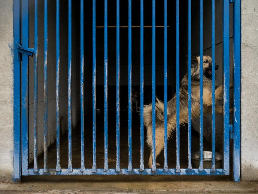 Dziennikarze Faktu pomagają zwierzakom