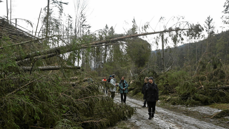 Tatrzański Park Narodowy poinformował, że wiatr halny powalił kilkadziesiąt tysięcy metrów sześciennych drzew - podaje TVN24.