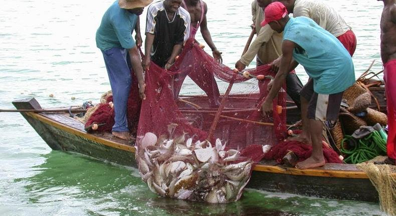 Ghana loses $81.1 million to illegal fishing activities annually, study says