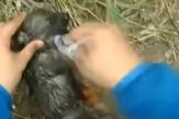 Štene davljenje spasavanje kuče pas prtscn