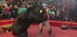 Szał niedźwiedzia w cyrku. Wszystko przez lampę błyskową z publiczności