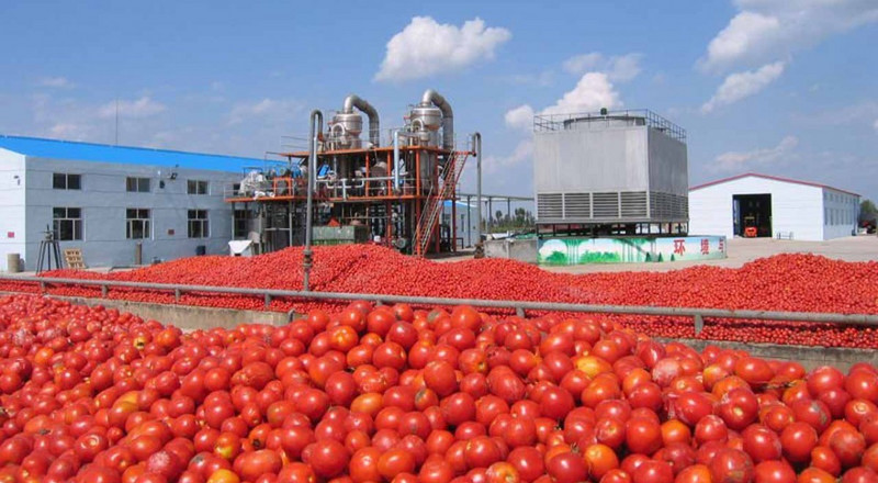 Dangote is reopening Nigeria's biggest tomato plant