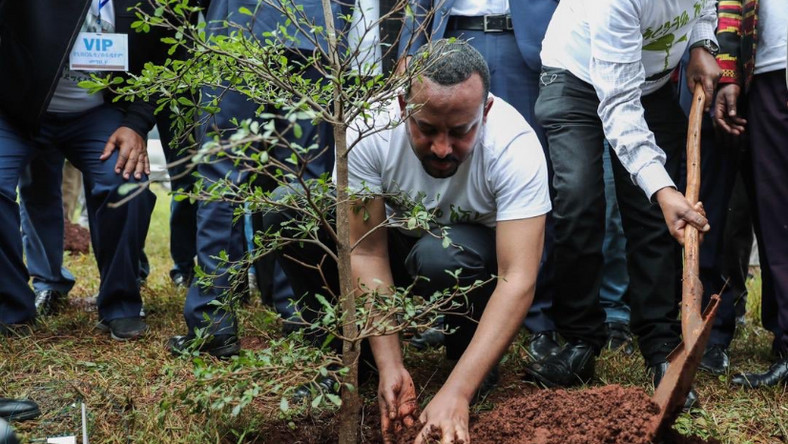 Prime Minister Abiy Ahmed planting a tree seedling.