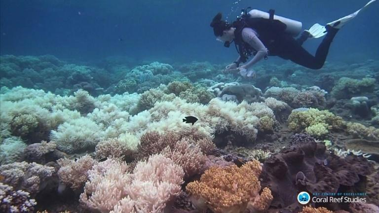 Bleached Barrier Reef coral 'more resilient to heat': Study