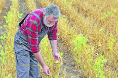 farmer-agronomist-examining-soybean-plant-450w-756191083