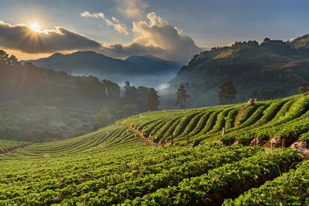 Wzgórza wokół Chiang Mai