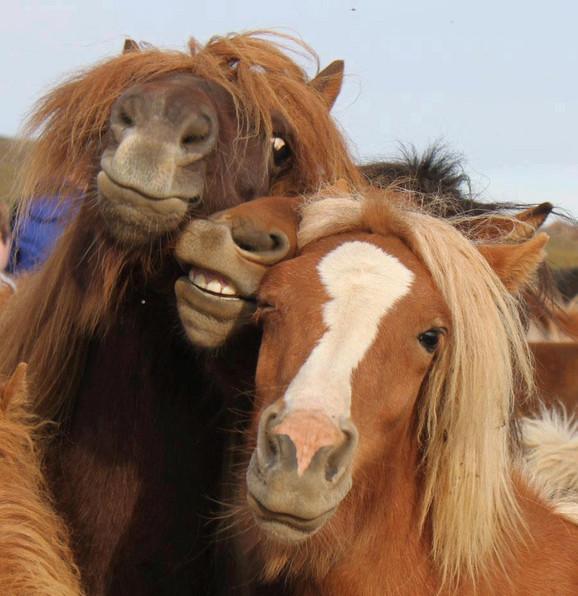 Srećna konjska porodica