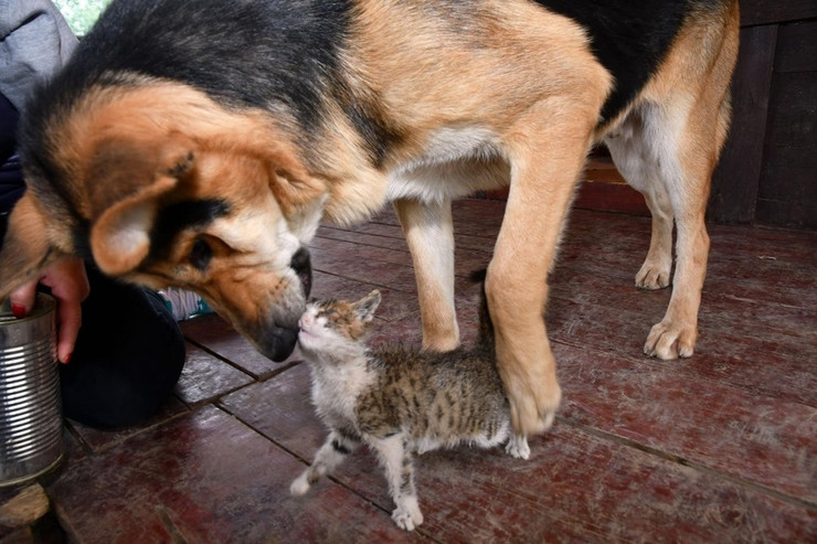 Tom i Džeri, pas i mačka