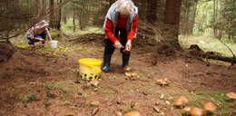Specjalna komisja zajmie się nazwami grzybów! Można zgłaszać własne propozycje