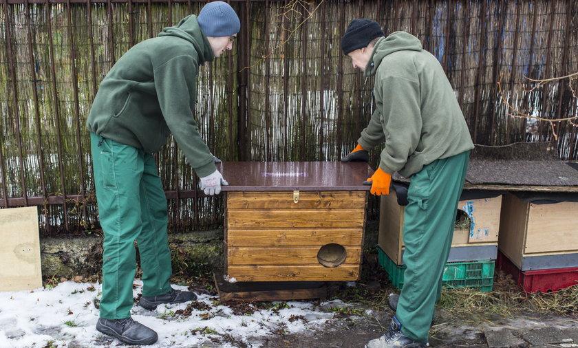 W Poznaniu stanie 40 domków dla bezpańskich kotów