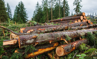 Konflikt leśników. Unijny plan na ekologiczny przemysł drzewny wywołał burzę