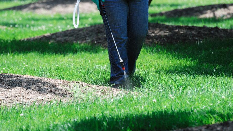 Opryski pomagają zwalczyć chwasty na trawniku - nd700/stock.adobe.com