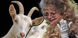 Villas kupiła... kozę