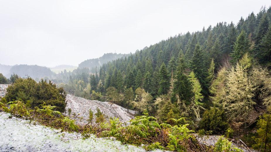 Zima na wyspie wiecznej wiosny. Na Maderze spadł śnieg