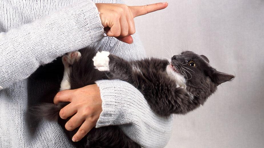 Zdarza się, że koty gryzą po rękach swojego właściciela - CallallooAlexis/stock.adobe.com
