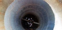 Zabili psa, a jego ciało wrzucili do studzienki kanalizacyjnej