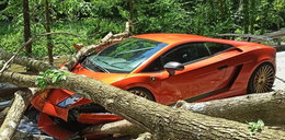 Masakra! Drzewo spadło na lamborghini warte fortunę