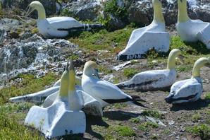 Smrt najusamljenije ptice na svetu