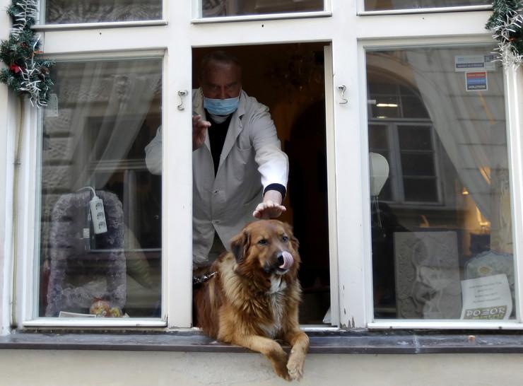 Psi, pas, kućni ljubimci, korona