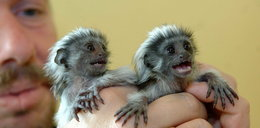 Zwierzęce bliźnięta. Wyjątkowe zdjęcia!