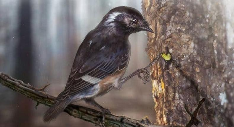 Why did this extinct bird have such a weird, long toe?
