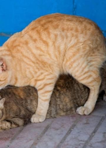 Seks maca slika