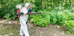 Ekolog do urzędników: opryski szkodzą ludziom i zwierzętom!