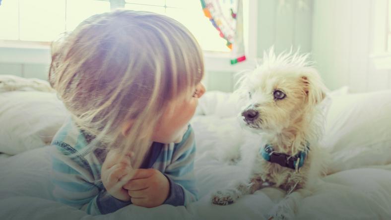 Pies ugryzł małego chłopca. Co w tym czasie robiła matka dziecka?