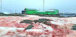 Krwawe plamy na Antarktydzie. Co to jest?