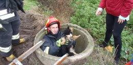 Uratowali psa ze studni