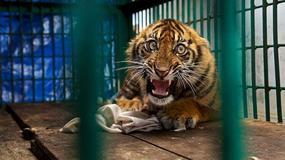 Oto zdjęcia finalistów Wildlife Photographer of the Year 2017