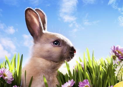 życzenia Na Wielkanoc Wielkanocne Wierszyki I życzenia