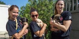 Siatkarki promują adopcje psiaków w schronisku